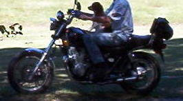 BikerBear