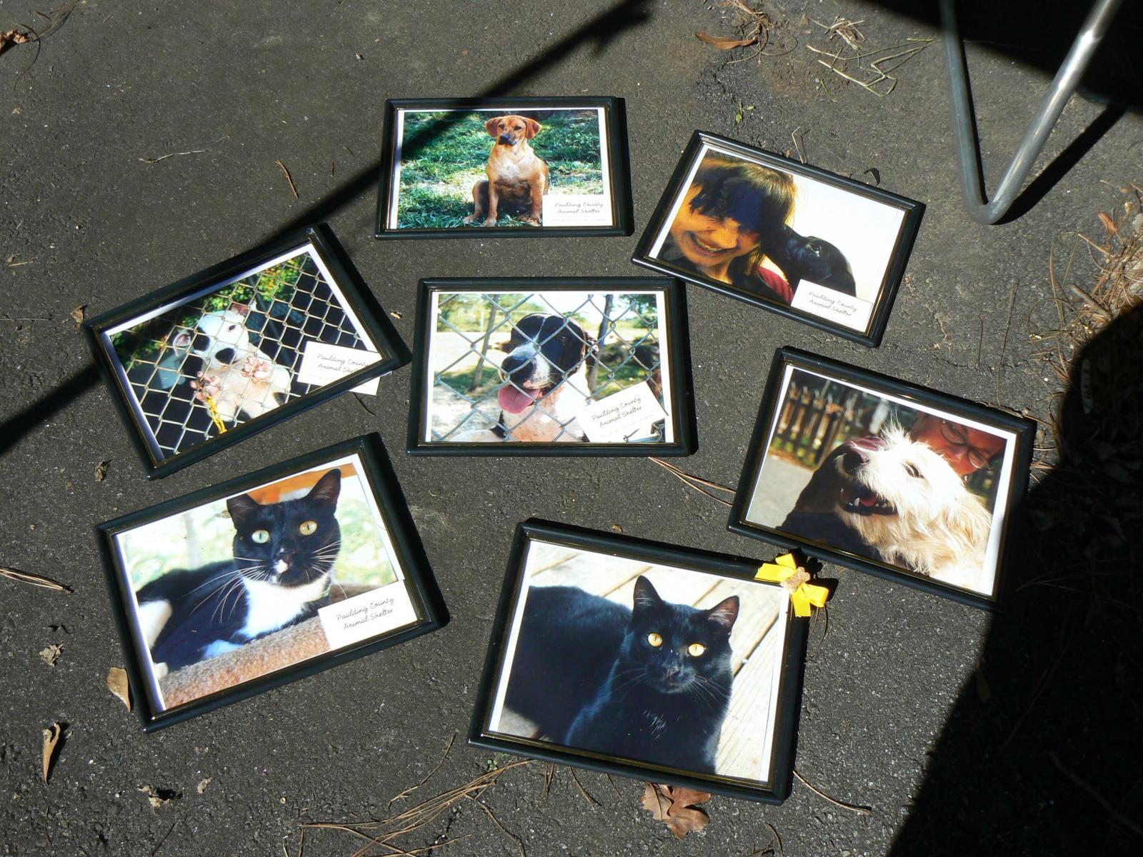 Yardsale at Tender Loving Pet Grooming to benefit the Humane Society (5).JPG