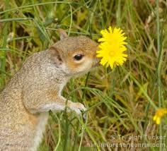 squirl and flower.jpg
