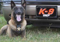 K9 Grep retires