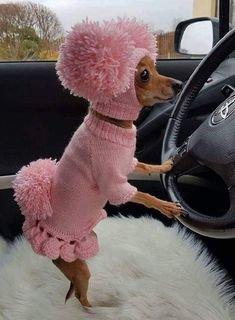 pink dog.jpg