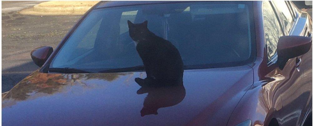 Cat- car.jpg
